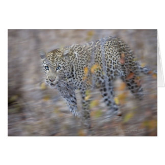 blurred motion greeting card