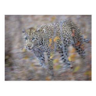 blurred motion postcard