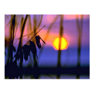 Blurred Sunset View Post Cards