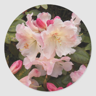 Blush Pink Rhododendrons Floral Classic Round Sticker