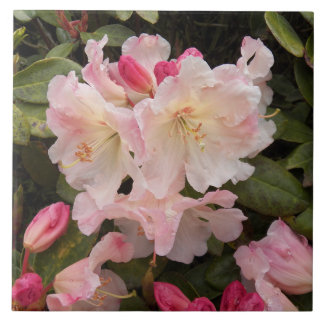 Blush Pink Rhododendrons Floral Large Square Tile