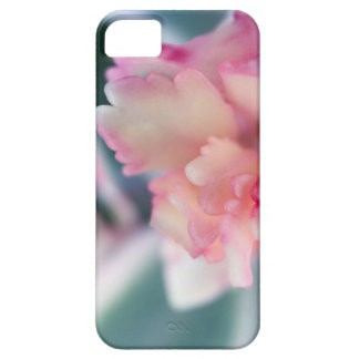BlushedPink iPhone 5 Cover