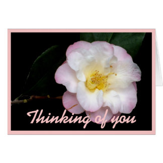 Blushing Pink Camellia Note Card