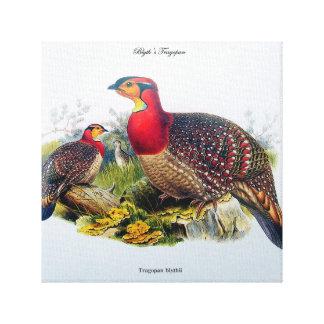 Blyth's Tragopan aka Horny Pheasant J.Gould Canvas Stretched Canvas Print