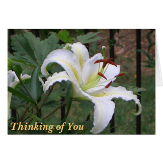 BN-  White Lilly Sympathy card