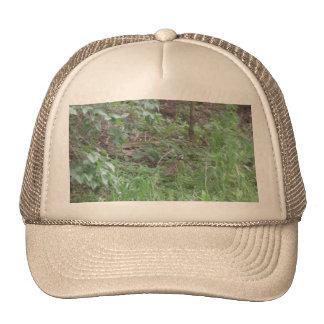 Bob In The Woods Cap