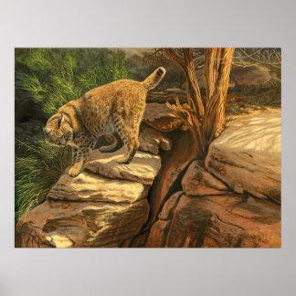 Bobcat Adventure - Poster