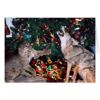 Bobcat Coyote Wild Animal Southwest Christmas Card