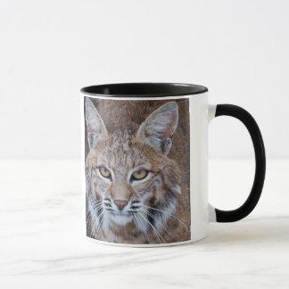 Bobcat Face Mug