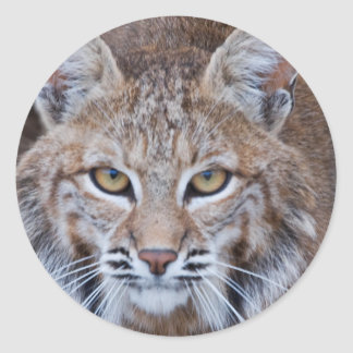 Bobcat Face Round Sticker