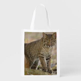 Bobcat, Felis rufus, Wakodahatchee Wetlands, Reusable Grocery Bag