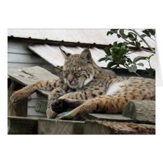 Bobcat Friends Missing You -- Let's Hang Out Card
