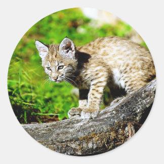 Bobcat Kitten Classic Round Sticker