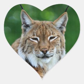 Bobcat lynx beautiful photo sticker stickers