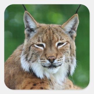 Bobcat, lynx beautiful photo sticker,  stickers