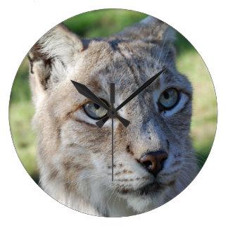 BOBCAT ~ lynx ~ Lynx ~ photo: Jean Louis Glineur Clocks