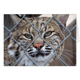 Bobcat Lynx Wild Cat Greeting Card