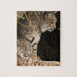 Bobcat Photo Puzzle