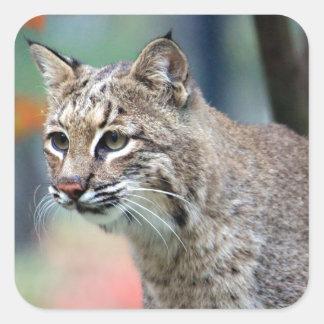 Bobcat Square Sticker