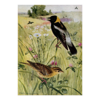 Bobolinks, Daisies and Pink Clover Poster