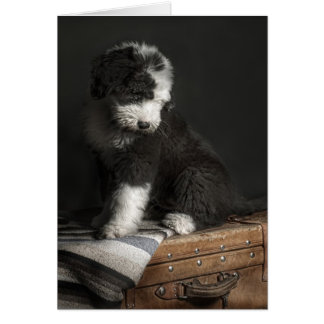 Bobtail puppy portrait in studio card