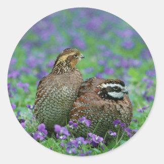 Bobwhite Quail Photography Round Sticker