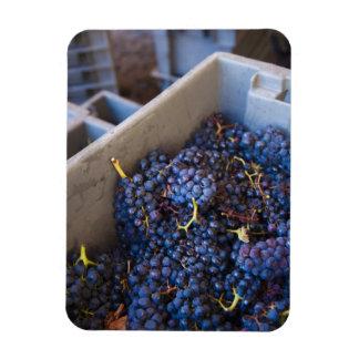 Bodega Marques de Riscal winery, grapes Rectangular Photo Magnet