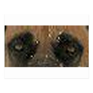 boerboel eyes postcard