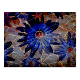 Bohemian Mod Blue Red Crackle Wildflower Postcard
