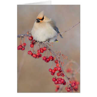 Bohemian waxwing in winter, Canada Card