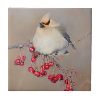 Bohemian waxwing in winter, Canada Ceramic Tile