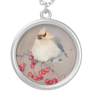 Bohemian waxwing in winter, Canada Silver Plated Necklace