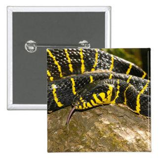 Boiga dendrophila or mangrove snake 15 cm square badge