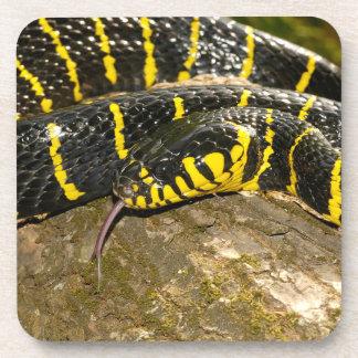 Boiga dendrophila or mangrove snake coaster