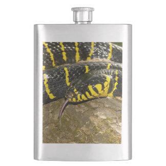 Boiga dendrophila or mangrove snake hip flask