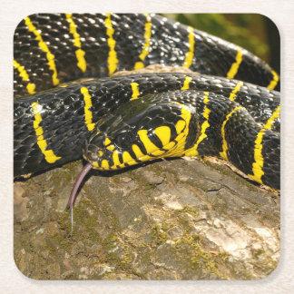 Boiga dendrophila or mangrove snake square paper coaster