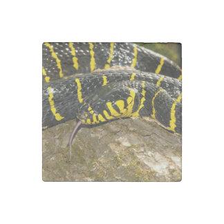 Boiga dendrophila or mangrove snake stone magnet