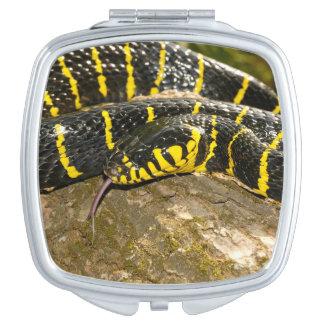 Boiga dendrophila or mangrove snake travel mirrors