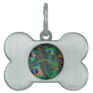 Bold and Rich Peacock Pet ID Tag