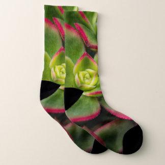 Bold Colorful Cactus Photo Socks
