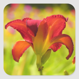 Bold Daylily Square Sticker