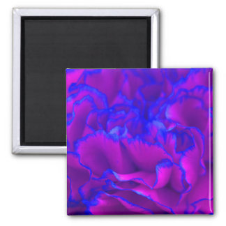 Bold Fuschia Pink and Blue Carnation Flower Magnet