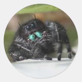 Bold Jumper Spider Sticker