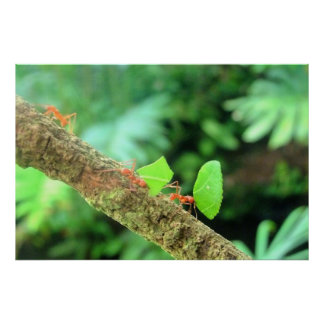 Bold Vibrant Funny Leafcutter Ants in Action Poster