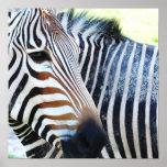Bold Zebra Poster