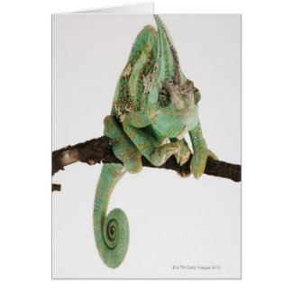 Boldly coloured chameleon with characteristic greeting card