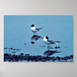 Bonaparte gull print