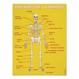 Bone Names for 3-D Animators Poster