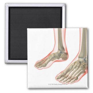 Bones of the Feet Square Magnet