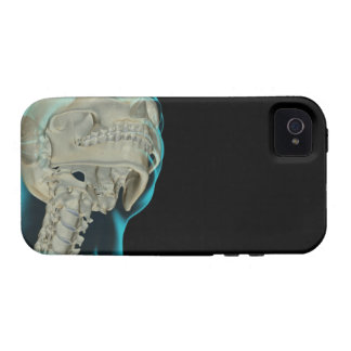 Bones of the Head and Neck 5 Case-Mate iPhone 4 Cases